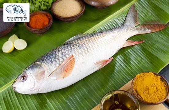 Rohu Eggless (Ganga River Fresh) Whole Wt - 1.9  to 2.2 Kg